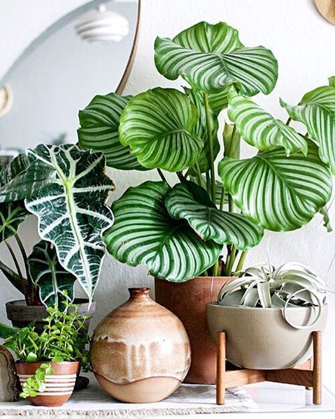 Patterned plants - Image from Pinterest by DIY Design and Decor
